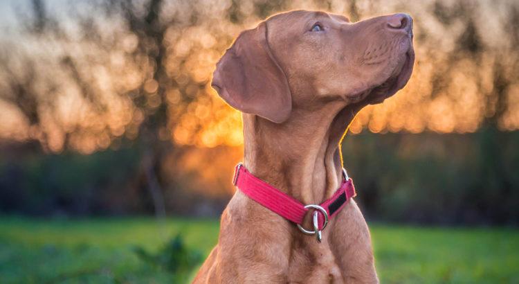 3fbae31a8ca Uuring: seos koera suuruse ja probleemse käitumise vahel