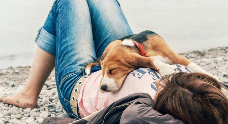 39f69d12d8a Uuring: sulle meeldib su koer – aga kas sina talle ka?