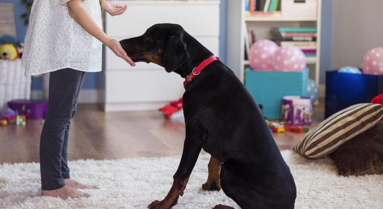 1804667e79a Koera treenimise meetod võib mõjutada koera heaolu