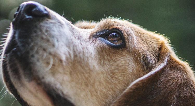 3eecac5b104 TLÜ Pressiteade: Suur osa omavalitsustest ei pea arvepidamist koerte üle  oluliseks