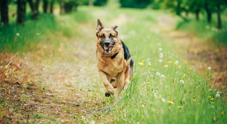 d6dc27ce912 Doktoritöö: Koerte isiksuseomaduste hindamise keerukus – Loomult Loom