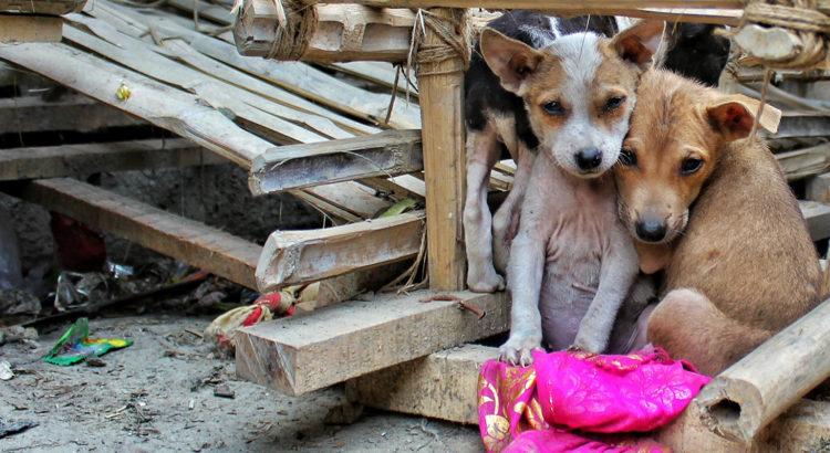166e3cb7328 Uuring: kuidas on seotud inimese suhe koeraga ja jäätmemajandus?
